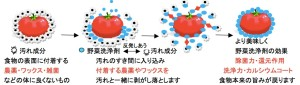 汚れ成分:食物の表面に付着する農薬・ワックス・雑菌などの身体に良くないもの、野菜洗浄←⇒汚れ成分:汚れの隙間に入り込み付着する農薬やワックスを汚れと一緒に剥がし落とします。より美しく野菜洗浄剤の効果 除菌力・還元作用・洗浄力・カルシウムコート 食物本楽の旨みが戻ります