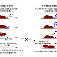ORP(酸化還元電位)とphの効果